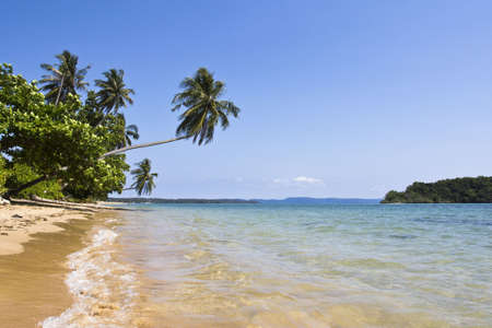 The long beach with coconut tree at Koh Mak, Trad, Thailand photo