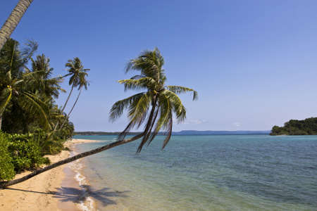 The long beach with coconut tree at Koh Mak, Trad, Thailand