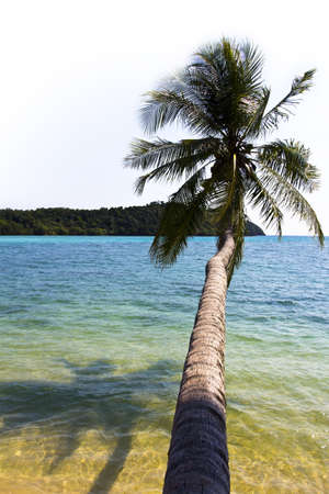 The coconut tree stretch out to the sea at Koh Mak island, Trat, Thailand