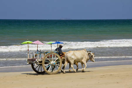 Myanmar April 2012  Man riding a cart with oxs on Ngwe Saung beach in west coast of Myanmar