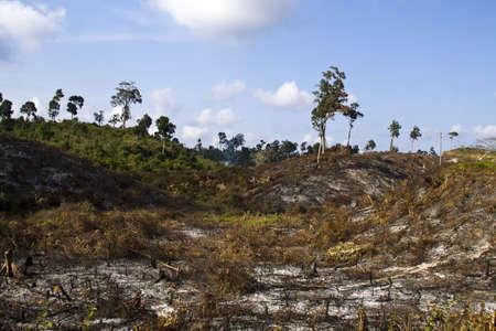 slash: no tree in mountains, Myanmar Stock Photo