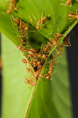 Ants group together to build the house