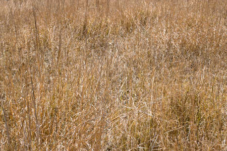 Dry grass field Stock Photo