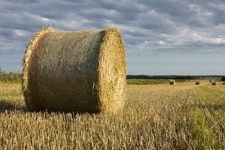 Roll of hay on the field in Denmark