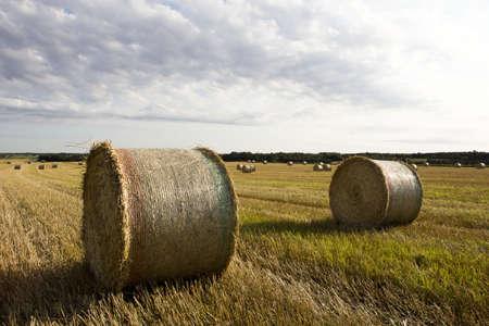 Roll of hay on field in Denmark Stock Photo