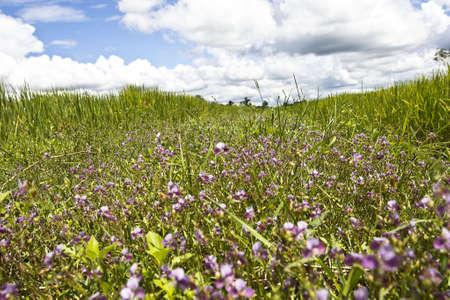 flower field blue sky