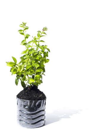 Small green tree for plan with black soil earth in plastic bucket
