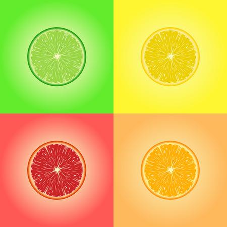 citrus fruits: Collection of four citrus fruits. Lemon, lime, orange, grapefruit. Vector.