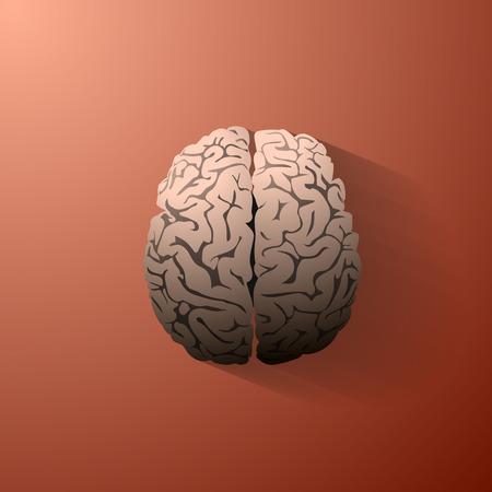 parietal: An illustration of the human brain. Vector eps10 Illustration