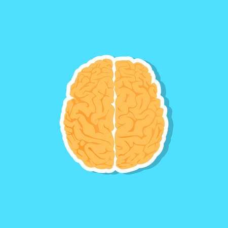 An illustration of the human brain. Vector eps10 Illustration