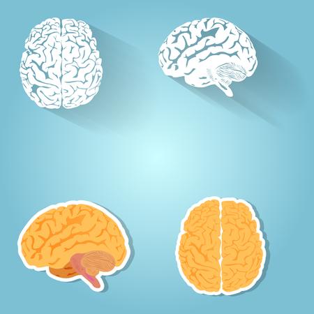 parietal: Set of the human brain.