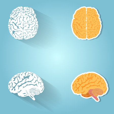 parietal: Set of the human brain, design elements and icons.