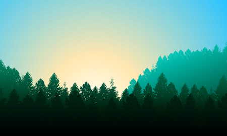 trees silhouette: Morning forest. Background with pines, sky and sun. Illustration