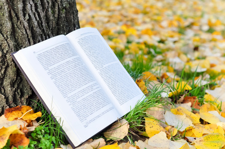 book background: Open book in nature