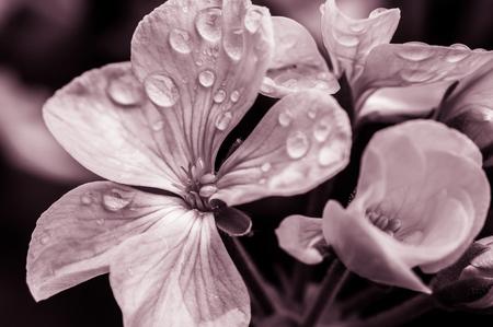 gotas de agua: Flor con gotas de lluvia Foto de archivo