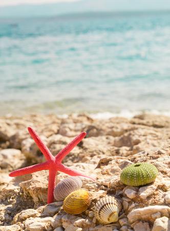 Starfish seashells beach summer background