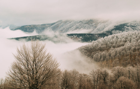 Mountain forest landscape covered with fog and hoarfrost in winter