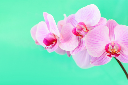 Pink orchid flower background
