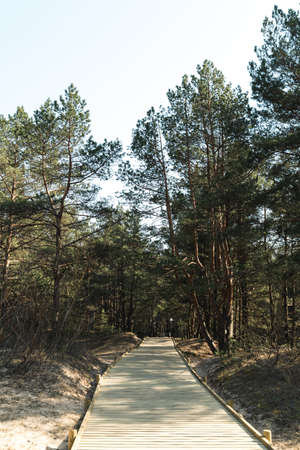 New wooden road leading from the beach of Baltic Sea gulf with white sand to the dune forest with pine trees