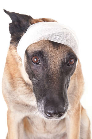 Ear or head bandage