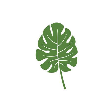 monstera leaf vector element icon. monstera leaves vector decoration design