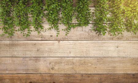 3d vegetazione resa edera sulla parete di legno
