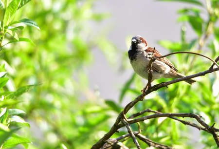 Sparrow cubs in the city