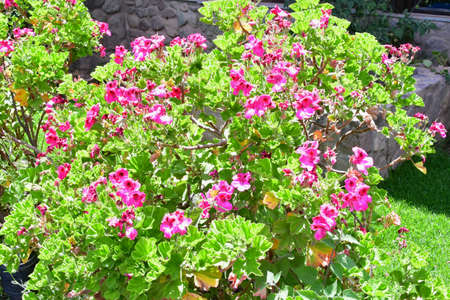 Brightly colored Peruvian flowers - Sacred Valley - Wayra Urubamba is a large space with brightly colored flowers overlooking the mountains and stunning gardens of the Sacred Valley.