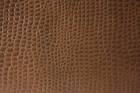 texture of crocodile skin for the background  photo