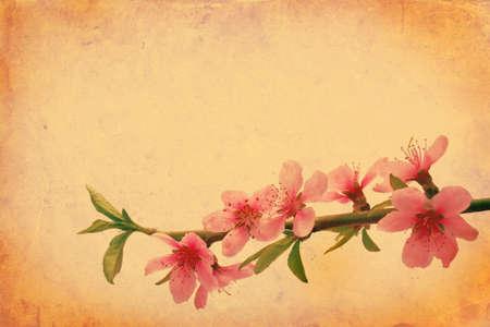 Vintage orange background with floral elements Stock Photo - 7788238