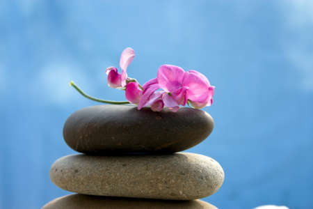 plumeria flower: Zen stones with a pink flower on a background of blue sky Stock Photo