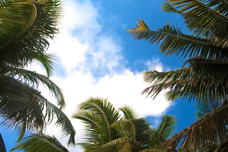andaman: Tropical sky through the palm tree leaves. Andaman Islands.