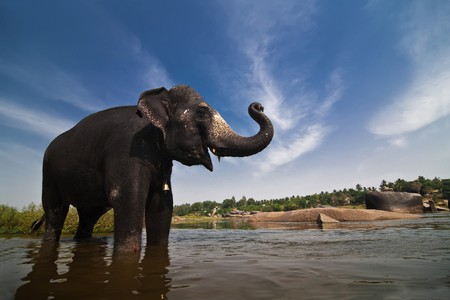 south east: Beautiful Indian elephant is standing in the river. Picturesque clouds on the background.