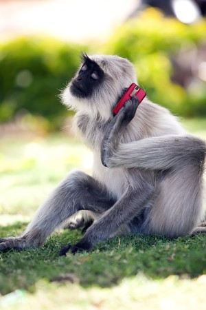Funny monkey is calling using red mobile phone. Green trees on the background. photo