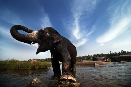 Beautiful Indian elephant is standing in the river. Picturesque clouds on the background.