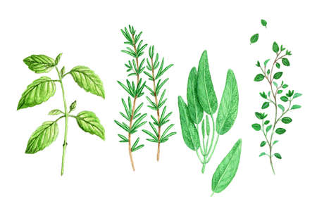 Watercolor Spicy Provence Herbs  photo