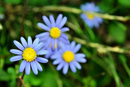 sch�ne blumen: sch�nen Blumen Lizenzfreie Bilder