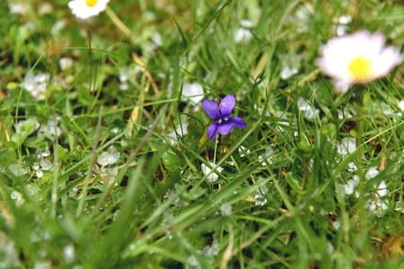 hail: Violet and Hail