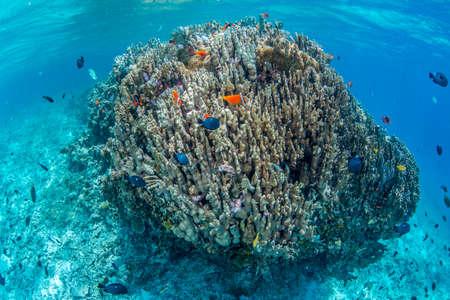 colony: Colony of Anemonefish