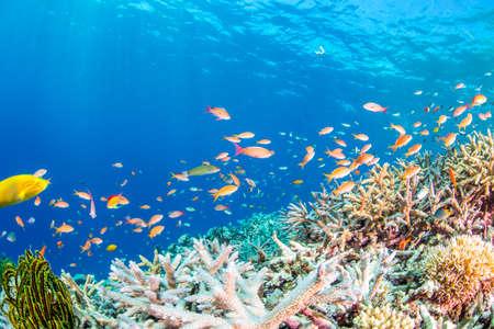 산호 정원