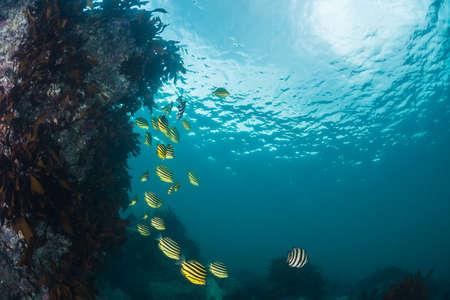 海藻と魚 写真素材
