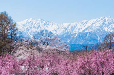 Scenery facing the mountains of Hakuba 免版税图像