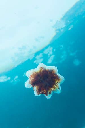 Jellyfish in the cold sea Banco de Imagens