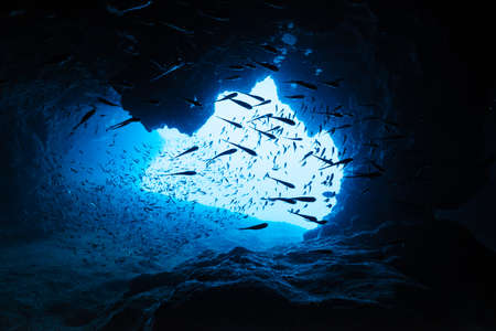 Sweepers in the underwater cave Banco de Imagens