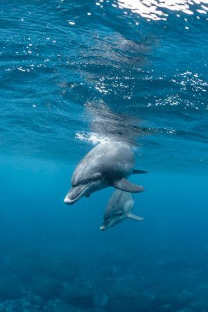 Dolphins living in Mikura Island