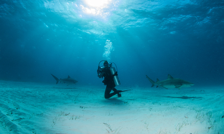 dangerous reef: Shark Diving