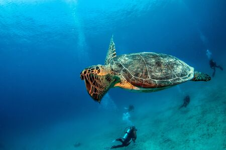 Picture shows a Turtle during a dive at Kas, Turkey Standard-Bild