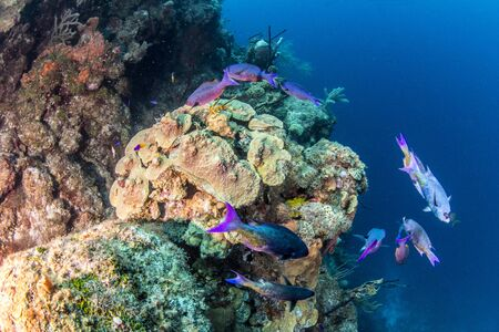 Scuba diving at the Blue Hole in Belize