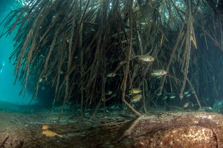 Picture was taken during Scuba diving in the Casa Cenote, Tulum, Mexico
