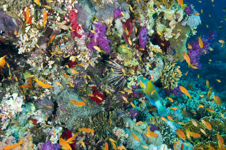 Colourful coral reef and fish